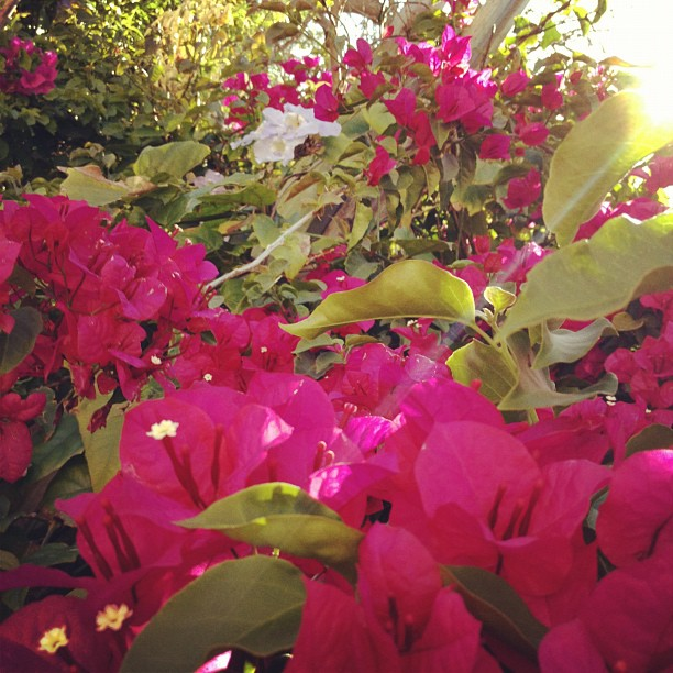 Blooming Spring!