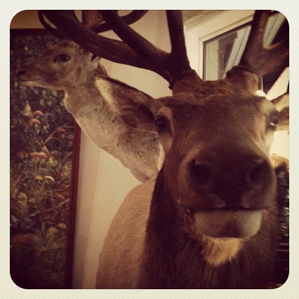 Reindeer...