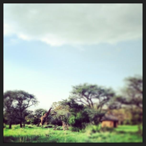 Giraffe sighting in South Africa :))))))