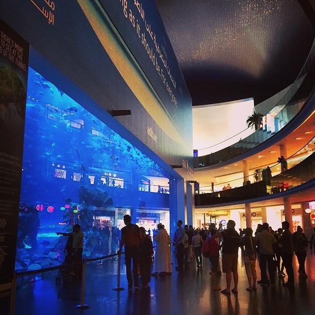 Huge aquarium inside of a shopping mall!