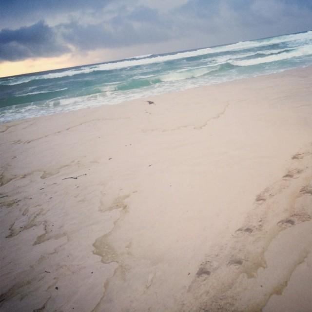 Beautiful South African Beach 隣のラグーンには野生のフラミンゴがいました!