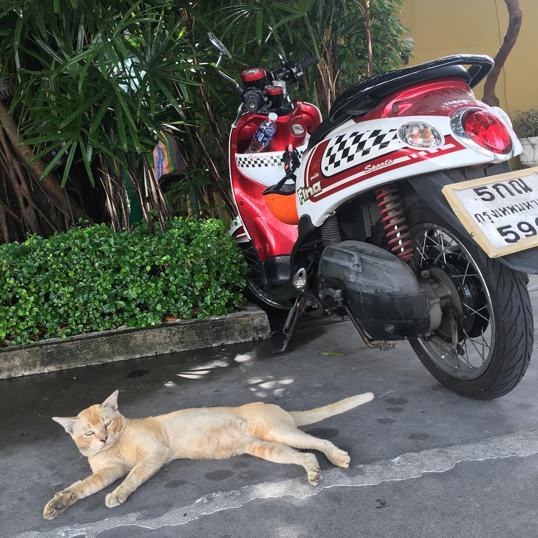 Grrr... welcomed in Thailand