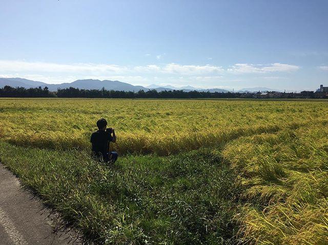 Shoot in Niigata#niigata #japan #ricefield