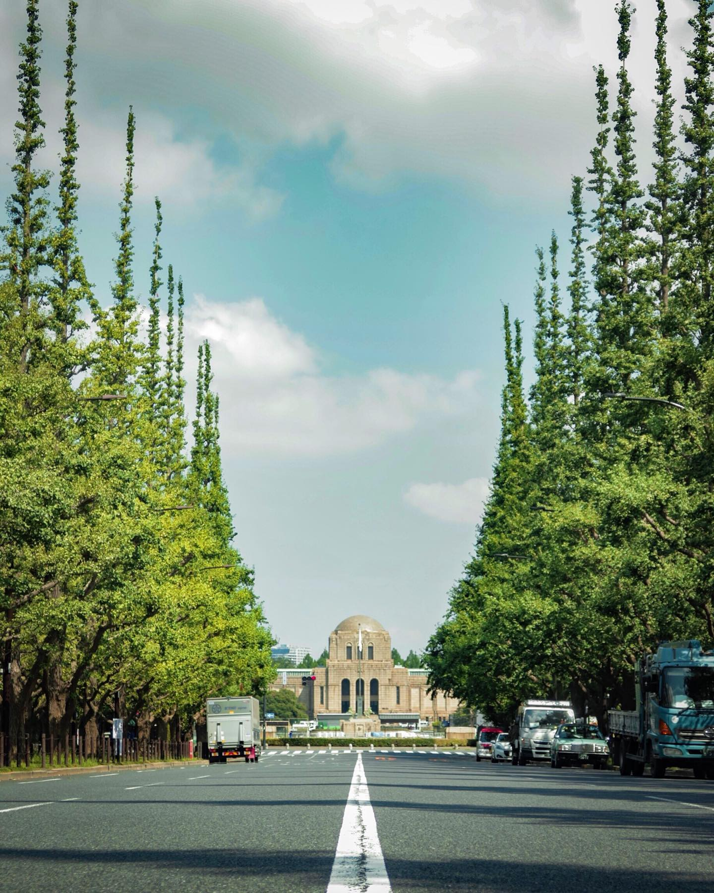 _ Here's this week's update from AOI Global at Ichonamiki, Gaien-mae and Tokyo!  The ginkgo trees you see here turns bright yellow in Autumn. People enjoy the spectacular view of such seasonal beauty in Japan.