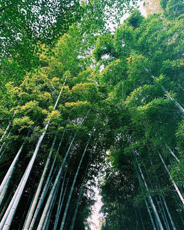 _⁣⁣ Here's today's update of  #shootinjapan from AOI Global at a bamboo forest in Kyoto. ⁣⁣ Bamboo is used to make a variety of different items in Japan and plays an important role in many aspects of Japanese culture. 