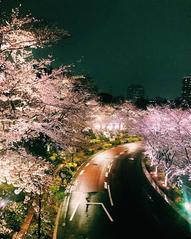 """ _ Here's this today's update of #shootinjapanfrom AOI Global in Roppongi, Tokyo.  Cherry blossoms at night are called """"yozakura"""". They are  just as breathtaking at night as they are in the sun. Many parks and gardens light up their cherry trees after sundown during the cherry blossom season.  #aoiglobal #shootinglocation #filmmakinglife #weeklyinspiration"""