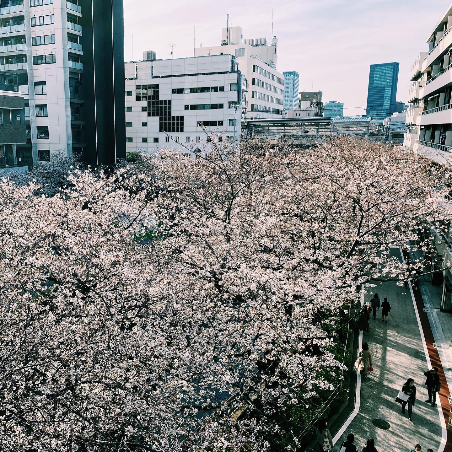 _ Cherry blossom season at the AOI Global Nakameguro office   A shot from our balcony📸 What a view  #weeklyinspiration #tokyocherryblossom