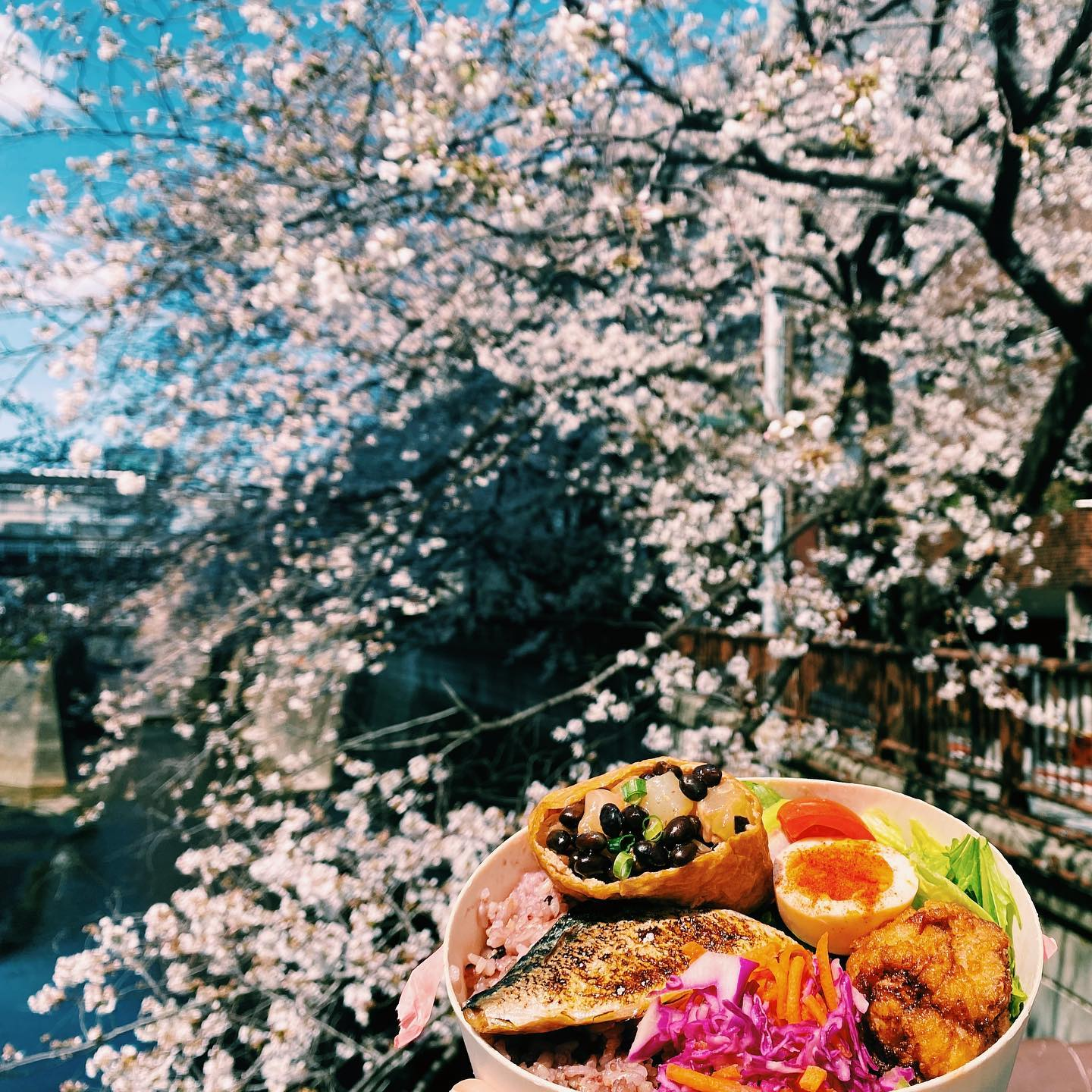_ Cherry blossom season at the AOI Global Nakameguro office  Beautiful Bento (Japanese packed meal) to accompany our Hanami (flower viewing)  #weeklyinspiration #tokyocherryblossom